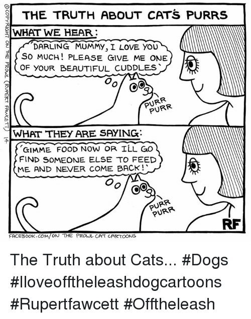 I Love You, Man: THE TRUTH ABOUT CATS PURRS  el WHAT WE HEAR:  DARLING MUMMY, I LOVE YOU  SO MUCH PLEASE GIVE ME ONE  M  (OF BEAUTIFUL cuDDLES  CoC  NR  WHAT THEY ARE SAYING:  GIMME FOOD NOW OR ILL GO  FIND SOMEONE ELSE TO FEED  ME AND NEVER COME BACK!  PURR  FACEBOOK CO  ON THE PROUL CAT CARTOONS The Truth about Cats... #Dogs #Iloveofftheleashdogcartoons #Rupertfawcett #Offtheleash