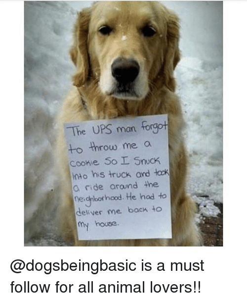 Ups Man: The UPS man forgot  to throw me a  Cookie So SncK  into his truck and łock  a nide arand the  negiborhood. He hod to  deliver me back to  house @dogsbeingbasic is a must follow for all animal lovers!!