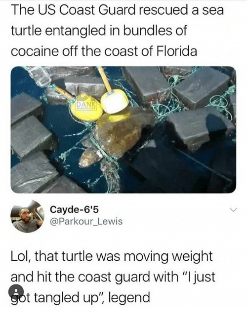 "Lol, Memes, and Cocaine: The US Coast Guard rescued a sea  turtle entangled in bundles of  cocaine off the coast of Florida  Cayde-6'5  @Parkour_Lewis  Lol, that turtle was moving weight  and hit the coast guard with ""I just  t tangled up"", legend"
