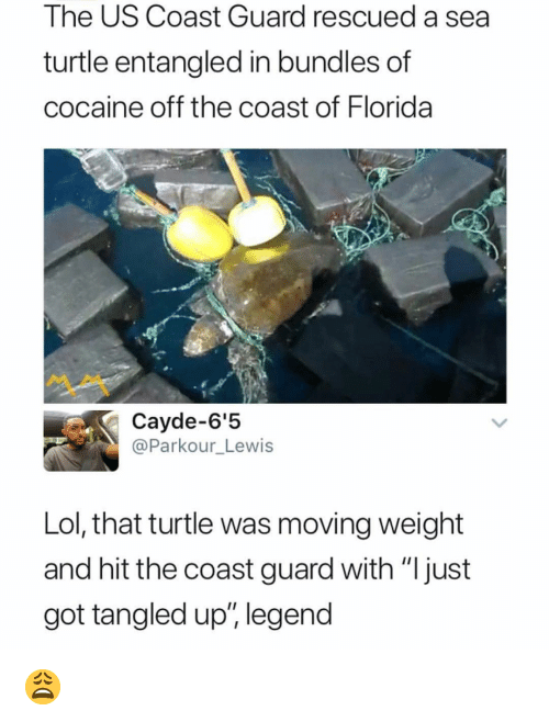 "Lol, Memes, and Cocaine: The US Coast Guard rescued a sea  turtle entangled in bundles of  cocaine off the coast of Florida  Cayde-6'5  @Parkour_Lewis  Lol, that turtle was moving weight  and hit the coast guard with ""Ijust  got tangled up"" legend 😩"