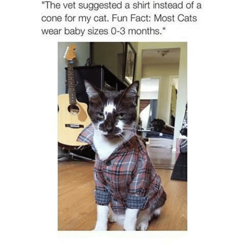 """Cats, Memes, and Baby: The vet suggested a shirt instead of a  cone for my cat. Fun Fact: Most Cats  wear baby sizes 0-3 months."""""""