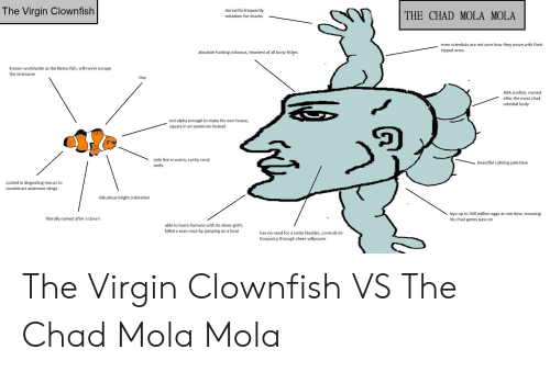 Paling: The Virgin Clownfish  dorsal fin frequently  mistaken for sharks  THE CHAD MOLA MOLA  even scientists are not sure how they move with their  ripped arms  absolute fucking colossus, heaviest of all bony fishes  known worldwide as the Nemo fish, will never escape  the nickname  tiny  AKA sunfish, named  after the most chad  celestial body  not alpha enough to make his own house,  squats in an anemone instead  only live in warm, cushy coral  reefs  beautiful calming pale blue  coated in disgusting mucus to  counteract anemone stings  ridiculous bright coloration  lays up to 300 million eggs at one time, ensuring  his chad genes pass on  literally named after a clown  able to harm humans with its sheer girth,  killed a man once by jumping on a boat  has no need for a swim bladder, controls its  bouyancy through sheer willpower The Virgin Clownfish VS The Chad Mola Mola