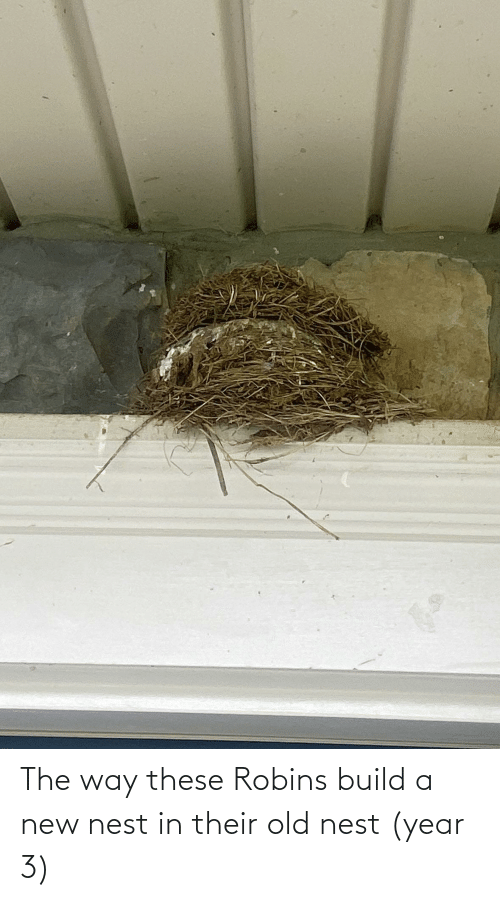 Nest: The way these Robins build a new nest in their old nest (year 3)