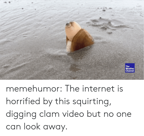 Weather Channel: The  Weather  Channel memehumor:  The internet is horrified by this squirting, digging clam video but no one can look away.