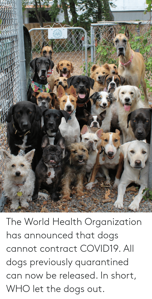 Cannot: The World Health Organization has announced that dogs cannot contract COVID19. All dogs previously quarantined can now be released. In short, WHO let the dogs out.