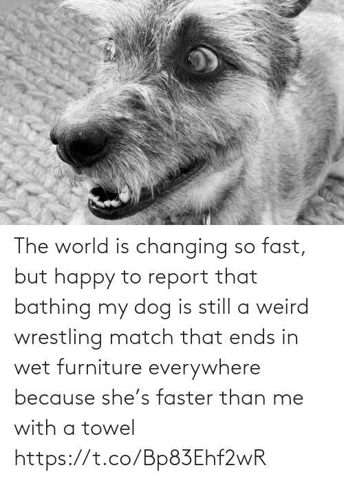 Match: The world is changing so fast, but happy to report that bathing my dog is still a weird wrestling match that ends in wet furniture everywhere because she's faster than me with a towel https://t.co/Bp83Ehf2wR