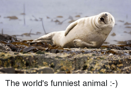 Funniest Animal Memes In The World : Funny animals memes cutest cats