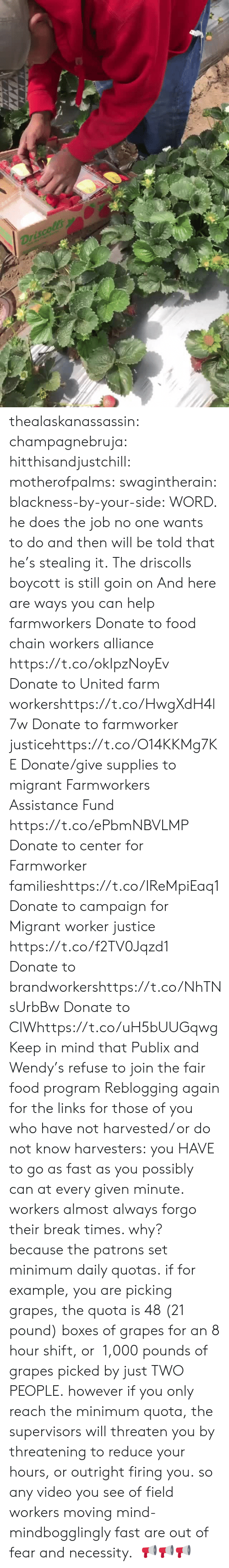 Migrant: thealaskanassassin:  champagnebruja:  hitthisandjustchill:  motherofpalms:  swagintherain:  blackness-by-your-side:  WORD.  he does the job no one wants to do and then will be told that he's stealing it.   The driscolls boycott is still goin on And here are ways you can help farmworkers Donate to food chain workers alliance  https://t.co/okIpzNoyEv Donate to United farm workershttps://t.co/HwgXdH4l7w Donate to farmworker justicehttps://t.co/O14KKMg7KE Donate/give supplies to migrant Farmworkers Assistance Fund https://t.co/ePbmNBVLMP Donate to center for Farmworker familieshttps://t.co/IReMpiEaq1 Donate to campaign for Migrant worker justice https://t.co/f2TV0Jqzd1 Donate to brandworkershttps://t.co/NhTNsUrbBw Donate to CIWhttps://t.co/uH5bUUGqwg Keep in mind that Publix and Wendy's   refuse to join the fair food program   Reblogging again for the links  for those of you who have not harvested/ or do not know harvesters: you HAVE to go as fast as you possibly can at every given minute. workers almost always forgo their break times. why? because the patrons set minimum daily quotas. if for example, you are picking grapes, the quota is 48 (21 pound) boxes of grapes for an 8 hour shift, or 1,000 pounds of grapes picked by just TWO PEOPLE.however if you only reach the minimum quota, the supervisors will threaten you by threatening to reduce your hours, or outright firing you. so any video you see of field workers moving mind-mindbogglingly fast are out of fear and necessity.   📢📢📢