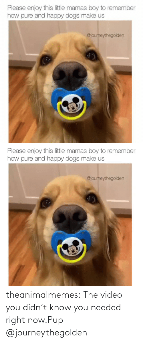 Know You: theanimalmemes:  The video you didn't know you needed right now.Pup @journeythegolden