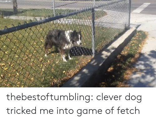 fetch: thebestoftumbling: clever dog tricked me into game of fetch