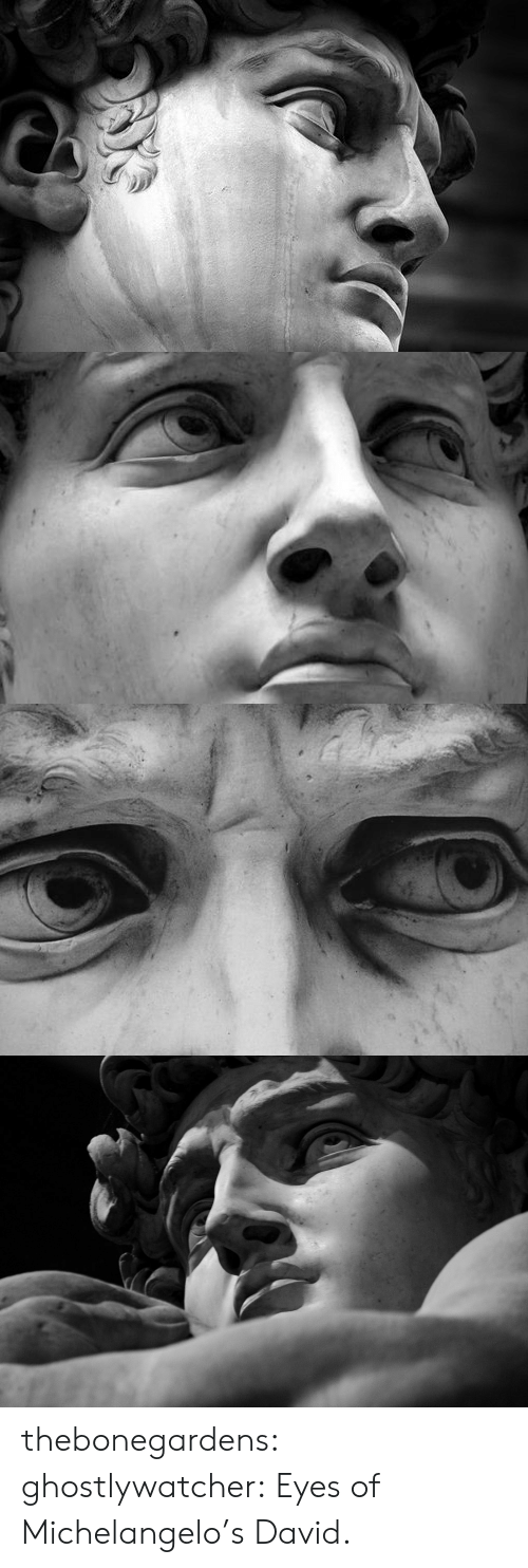 Michelangelo, Tumblr, and Blog: thebonegardens:  ghostlywatcher:  Eyes of Michelangelo's David.