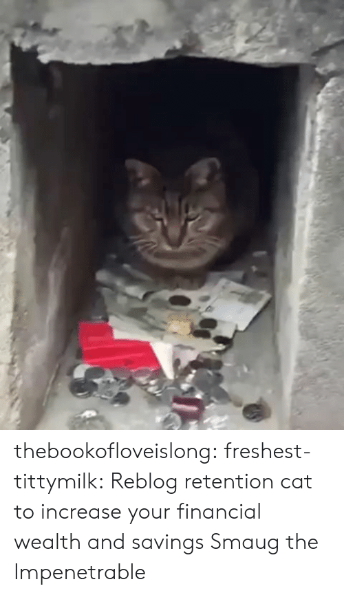 Tumblr, Blog, and Cat: thebookofloveislong:  freshest-tittymilk: Reblog retention cat to increase your financial wealth and savings  Smaug the Impenetrable