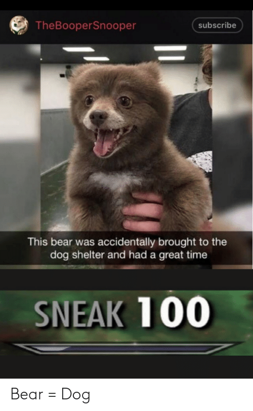 Bear, Time, and Dog: TheBooperSnooper  subscribe  This bear was accidentally brought to the  dog shelter and had a great time  SNEAK 100 Bear = Dog