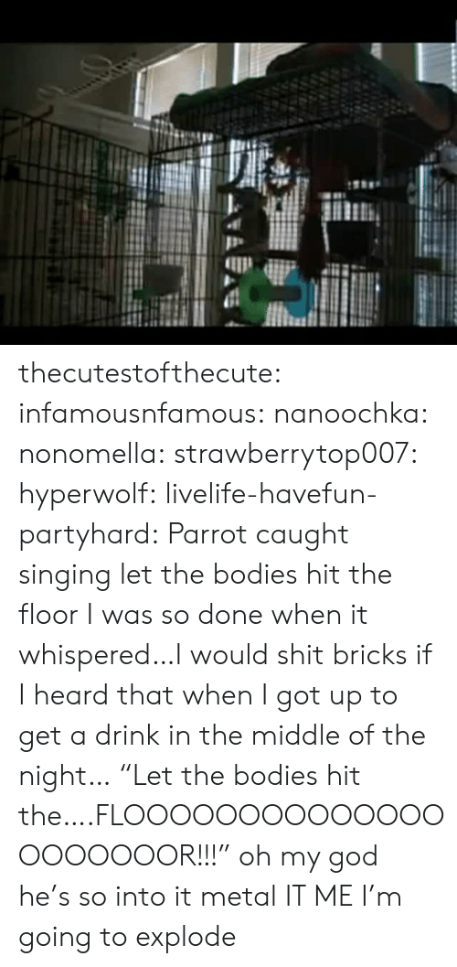 "Singing: thecutestofthecute: infamousnfamous:   nanoochka:  nonomella:  strawberrytop007:  hyperwolf:  livelife-havefun-partyhard:  Parrot caught singing let the bodies hit the floor  I was so done when it whispered…I would shit bricks if I heard that when I got up to get a drink in the middle of the night…  ""Let the bodies hit the….FLOOOOOOOOOOOOOOOOOOOOOR!!!""  oh my god he's so into it  metal   IT ME   I'm going to explode"