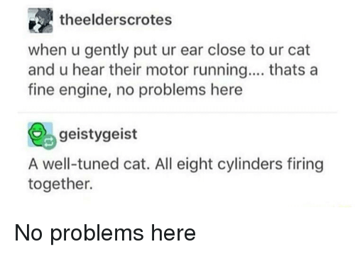Running, Cat, and Engine: theelderscrotes  when u gently put ur ear close to ur cat  and u hear their motor running.... thats a  fine engine, no problems here  geistygeist  A well-tuned cat. All eight cylinders firing  together. No problems here