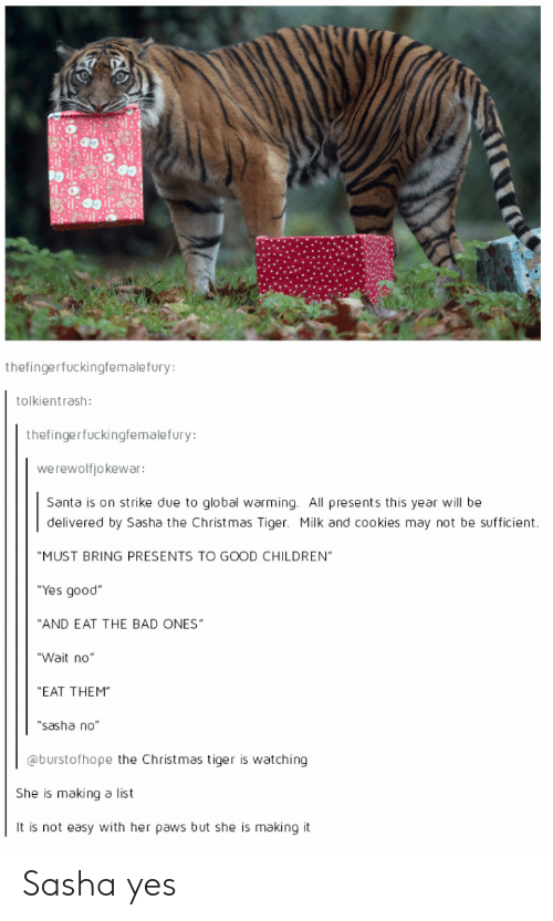 "Bad, Children, and Christmas: thefingerfuckingfemalefury:  tolkientrash:  thefingerfuckingfemalefury:  werewolfjokewar:  Santa is on strike due to global warming. All presents this year will be  delivered by Sasha the Christ mas Tiger. Milk and cookies may not be sufficient.  ""MUST BRING PRESENTS TO GOOD CHILDREN""  ""Yes good""  ""AND EAT THE BAD ONES""  ""Wait no""  ""EAT THEM""  ""sasha no""  @burstofhope the Christmas tiger is watching  She is making a list  It is not easy with her paws but she is making it Sasha yes"