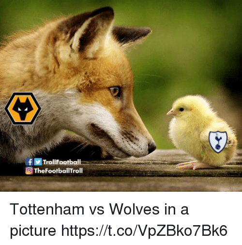 Memes, Wolves, and A Picture: TheFootballTroll Tottenham vs Wolves in a picture https://t.co/VpZBko7Bk6
