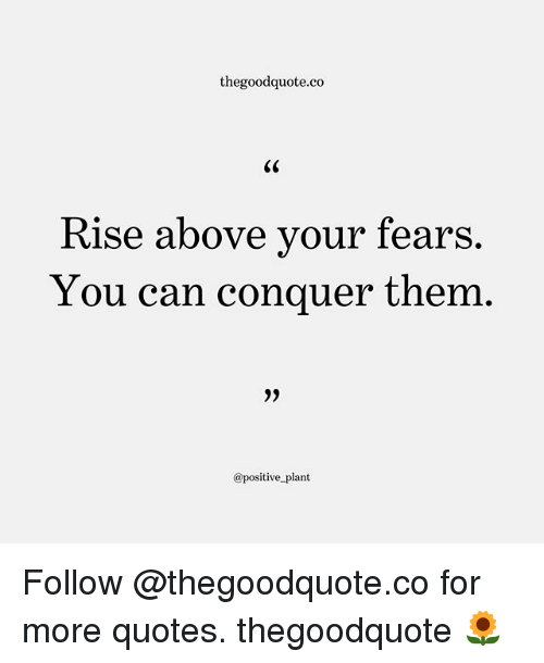 Memes, Quotes, and 🤖: thegoodquote.co  Rise above vour fears.  You can conquer them  @positive plant Follow @thegoodquote.co for more quotes. thegoodquote 🌻
