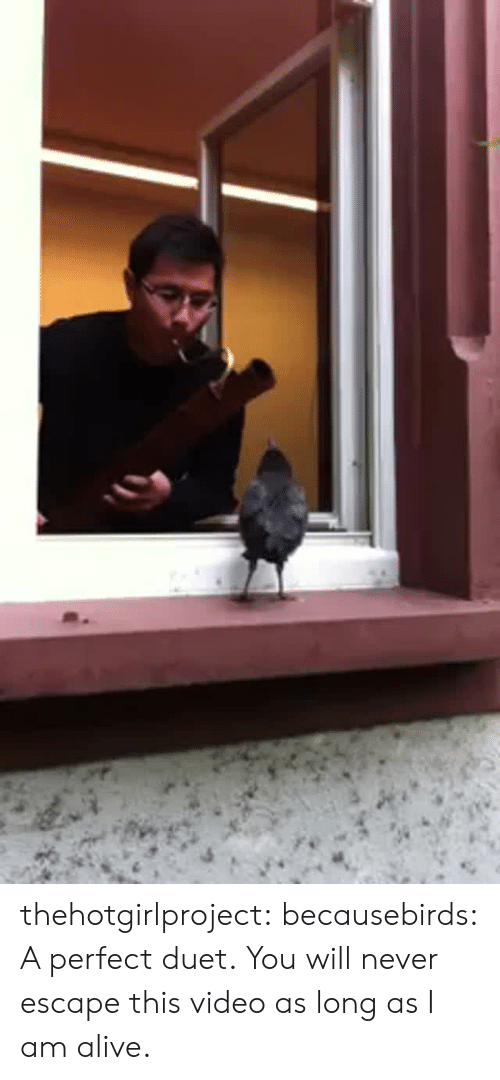 duet: thehotgirlproject: becausebirds:  A perfect duet.  You will never escape this video as long as I am alive.