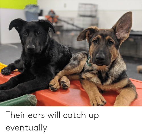 ears: Their ears will catch up eventually
