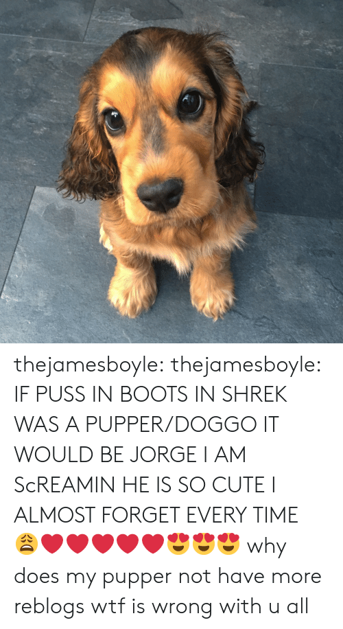 Jorge: thejamesboyle: thejamesboyle:  IF PUSS IN BOOTS IN SHREK WAS A PUPPER/DOGGO IT WOULD BE JORGE I AM ScREAMIN HE IS SO CUTE I ALMOST FORGET EVERY TIME 😩❤️❤️❤️❤️❤️😍😍😍  why does my pupper not have more reblogs wtf is wrong with u all