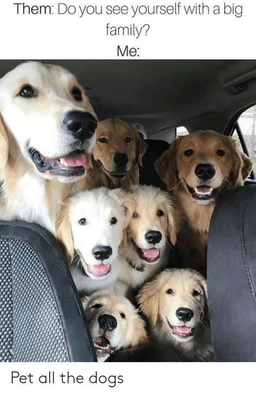 Dank, Dogs, and Family: Them: Do you see yourself with a big  family?  Me: Pet all the dogs