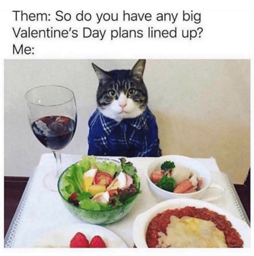 Valentine's Day: Them: So do you have any big  Valentine's Day plans lined up?  Me: