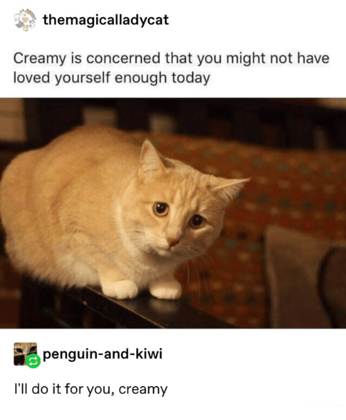 concerned: themagicalladycat  Creamy is concerned that you might not have  loved yourself enough today  penguin-and-kiwi  I'll do it for you, creamy