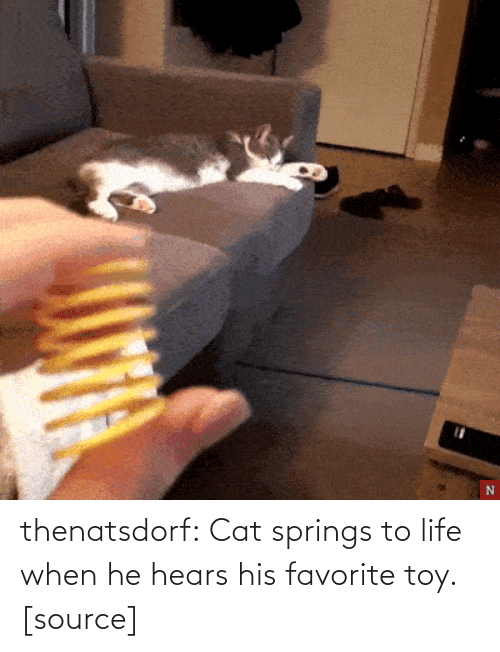 toy: thenatsdorf:  Cat springs to life when he hears his favorite toy. [source]