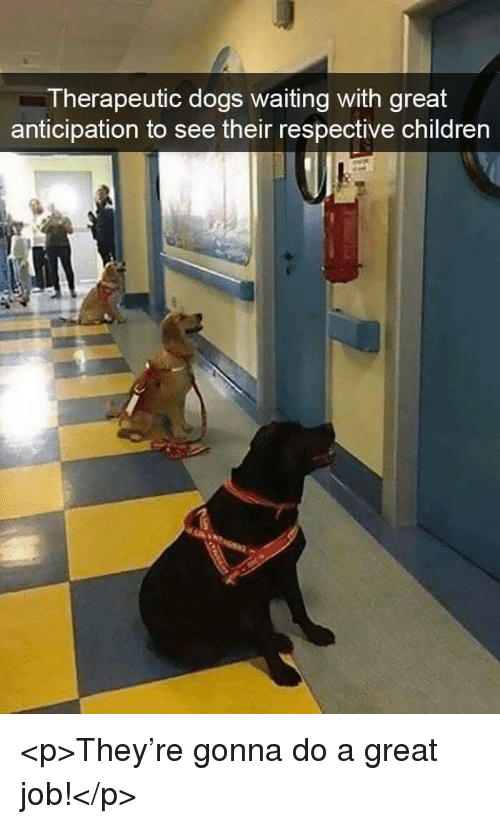 Children, Dogs, and Waiting...: Therapeutic dogs waiting with great  anticipation to see their respective children <p>They're gonna do a great job!</p>