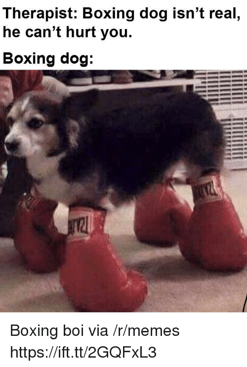 Boxing, Memes, and Boi: Therapist: Boxing dog isn't real  he can't hurt you.  Boxing dog Boxing boi via /r/memes https://ift.tt/2GQFxL3