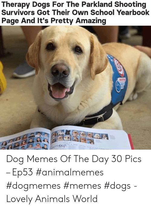 Animals, Dogs, and Memes: Therapy Dogs For The Parkland Shooting  Survivors Got Their Own School Yearbook  Page And It's Pretty Amazing  wnshy Dog Memes Of The Day 30 Pics – Ep53 #animalmemes #dogmemes #memes #dogs - Lovely Animals World