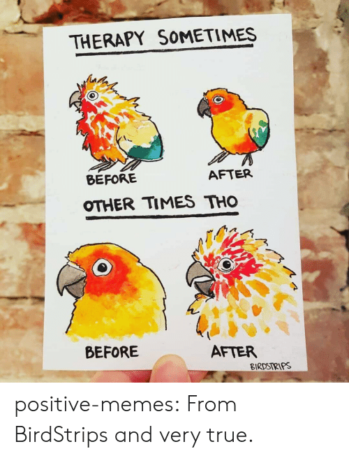 before after: THERAPY SOMETIMES  BEFORE  AFTER  OTHER TIMES THO  BEFORE  AFTER  BIRDSIRIPS positive-memes: From BirdStrips and very true.