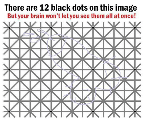 Black, Brain, and Image: There are 12 black dots on this image  But your brain won't let you see them all at once!
