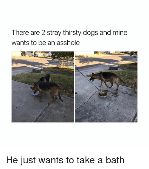 takes a bath: There are 2 stray thirsty dogs and mine  wants to be an asshole He just wants to take a bath