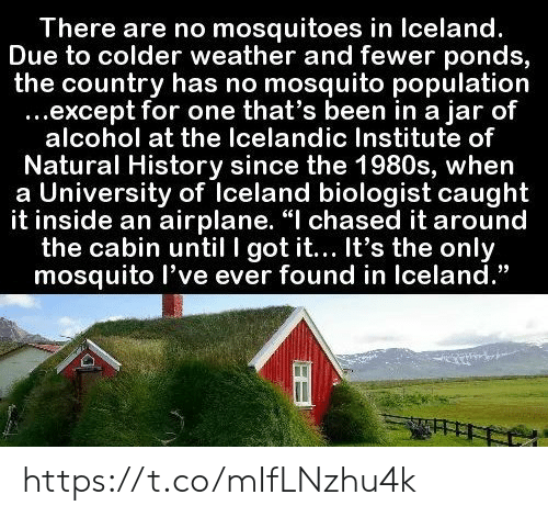 """Except For: There are no mosquitoes in Iceland.  Due to colder weather and fewer ponds,  the country has no mosquito population  ...except for one that's been in a jar of  alcohol at the Icelandic Institute of  Natural History since the 1980s, when  a University of Iceland biologist caught  it inside an airplane. """"I chased it around  the cabin until I got it... It's the only  mosquito l've ever found in Iceland."""" https://t.co/mIfLNzhu4k"""