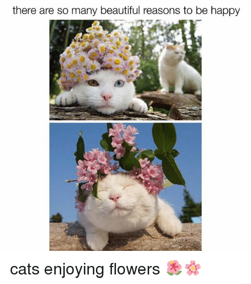 Beautiful, Cats, and Memes: there are so many beautiful reasons to be happy cats enjoying flowers 🌺🌸
