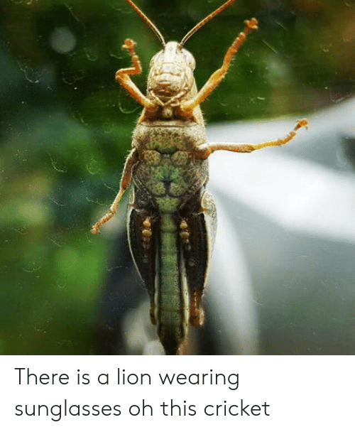 wearing sunglasses: There is a lion wearing sunglasses oh this cricket