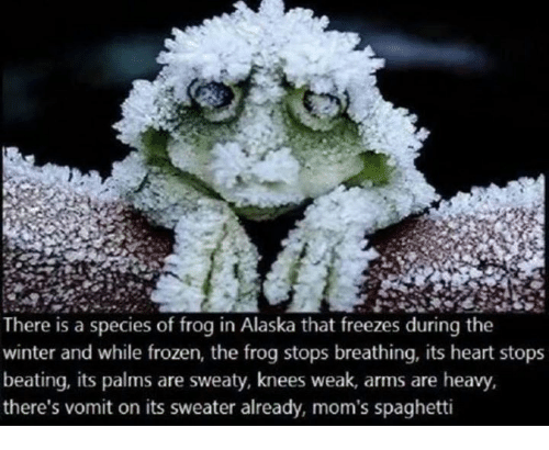 Palms Are Sweaty Knees Weak: There is a species of frog in Alaska that freezes during the  winter and while frozen, the frog stops breathing, its heart stops  beating, its palms are sweaty, knees weak, arms are heavy,  there's vomit on its sweater already, mom's spaghetti