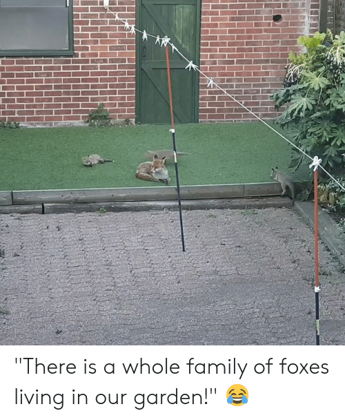 "foxes: ""There is a whole family of foxes living in our garden!"" 😂"