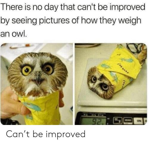 Pictures, How, and Owl: There is no day that can't be improved  by seeing pictures of how they weigh  an owl.  92. Can't be improved
