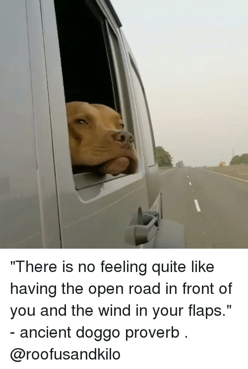 """winding: """"There is no feeling quite like having the open road in front of you and the wind in your flaps."""" - ancient doggo proverb . @roofusandkilo"""