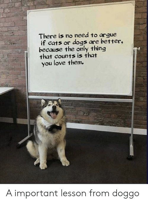 Arguing, Cats, and Dogs: There is no need to argue  if cats or dogs are better,  because the only thing  that counts is that  you love them. A important lesson from doggo