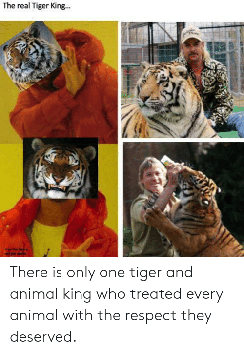 Treated: There is only one tiger and animal king who treated every animal with the respect they deserved.