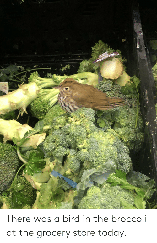 Today, Broccoli, and Store: There was a bird in the broccoli at the grocery store today.