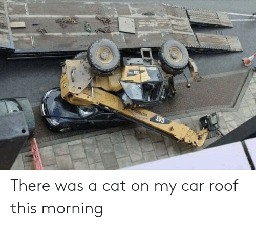 Cat, Car, and This: There was a cat on my car roof this morning