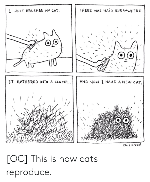 Cats, Hair, and How: THERE WAS HAIR EVERYWHERE  I JuST BRUSHED MY CAT,  AND NOW 1 HAVE A NEW CAT  IT GATHERED INTO A CLUM...  J  Elise Gravel [OC] This is how cats reproduce.