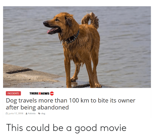 Incidents: THEREISNEWs com  INCIDENTS  Dog travels more than 100 km to bite its owner  after bein abarndoned  Junio 17, 2018  Fabiola 、dog This could be a good movie