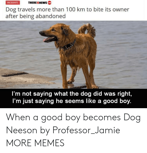 Incidents: THEREISNEWws  INCIDENTS  Dog travels more than 100 km to bite its owner  after being abandoned  I'm not saying what the dog did was right,  I'm just saying he seems like a good boy. When a good boy becomes Dog Neeson by Professor_Jamie MORE MEMES