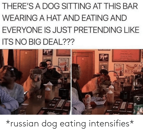 deal: THERE'S A DOG SITTING AT THIS BAR  WEARING A HAT AND EATING AND  EVERYONE IS JUST PRETENDING LIKE  ITS NO BIG DEAL???  Tots  ALCOHOL!  Hat Dog!  ALCOHOL!  Hat Dog  HOT DOGS *russian dog eating intensifies*